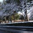 茨大通りの桜並木に雪