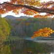 11月7日  沼の秋