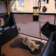 ホンダの愛犬コンセプトカー