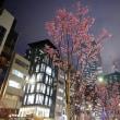 会社の前の桜はもはや満開に近い。