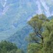 2091 樹景