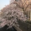 4月の花  大垣
