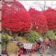 東京築地。山形。松島。蔵王。磐梯。日光。旅の紅葉と雪化粧