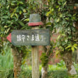 地徳阿蘇神社の大楠