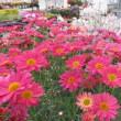 花壇に春が来ました~~♪