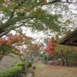 津奈木町・舞鶴公園の紅葉