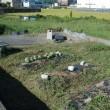 カボチャやスイカの収穫跡地を除草する。