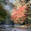 露天から乗り出す五体渓紅葉 流伴