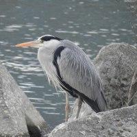 紀ノ川に百舌鳥がやってきた