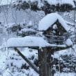 積雪17センチ
