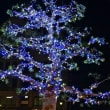 ヤマモモの木に装飾 (近鉄鵜方駅前)