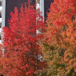 今、紅葉の街路樹