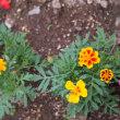 我家の花たち