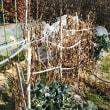 暖か…my畑の片付け