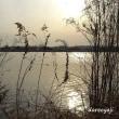 多摩川の水鳥