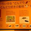 神奈川県小田原市・神奈川県立生命の星・地球博物館に行く
