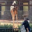 上野動物園へ行って来ました
