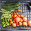 今日の収穫 トマト キュウリ オクラ ナス ズッキーニ トウガラシ類