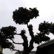 築城城跡の神社を訪ねる(香川の神社147)