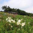 びわこ箱館山ゆり園 2014年の記録です