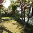 庭でハンモック