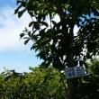 18/6/16 武奈が岳