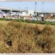 蕎麦の収穫と芋掘り体験