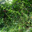 金平糖草(白玉星草)、秋の野草