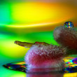 雫の彩り:ネコヤナギはミラーリング