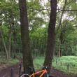 """木漏れ日の森で""""V""""・・・あの、オレンジ色のMTB・1000キロ突破!"""