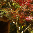 基山、大興善寺の紅葉(DP2merrill)