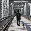 橋の上で「飛行犬」になったよ~デイキャンプ便り2~