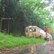 雨降りの森の中