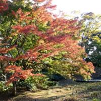 昭和記念公園の紅葉・・4
