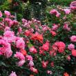 6/16花巻温泉のバラ園へ行きました。