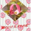 ハナミズキの花を加工