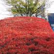 静岡鉄道は県立美術館駅前付近の紅葉 その4 (A3004 2018年12月)