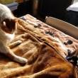 猫のグルーミング