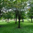 軽井沢のいろいろ 真夏の 軽井沢の公園では・・ 湯川ふるさと公園