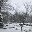 大雪のため。。。