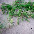 沖縄・6月のウートートー27日朝5時半、辺野古の浜の写真20枚