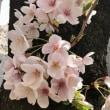 後一日🍀「三月大歌舞伎」