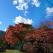 紅葉の山歩き~おにぎり弁当♪
