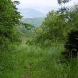 裏山(烏帽子岳568)で花散策