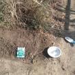 畑、青シソの種を蒔きました