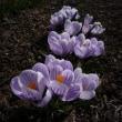 心が弾む春。躁だね~