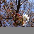 春を見に・・・