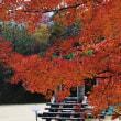 三重県民の森の楓(ふう)