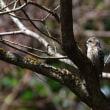 春と野鳥を探して