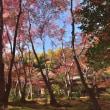 圓光寺・祇王寺・大覚寺(11/23~24)